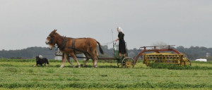 amish-woman-with-team-1